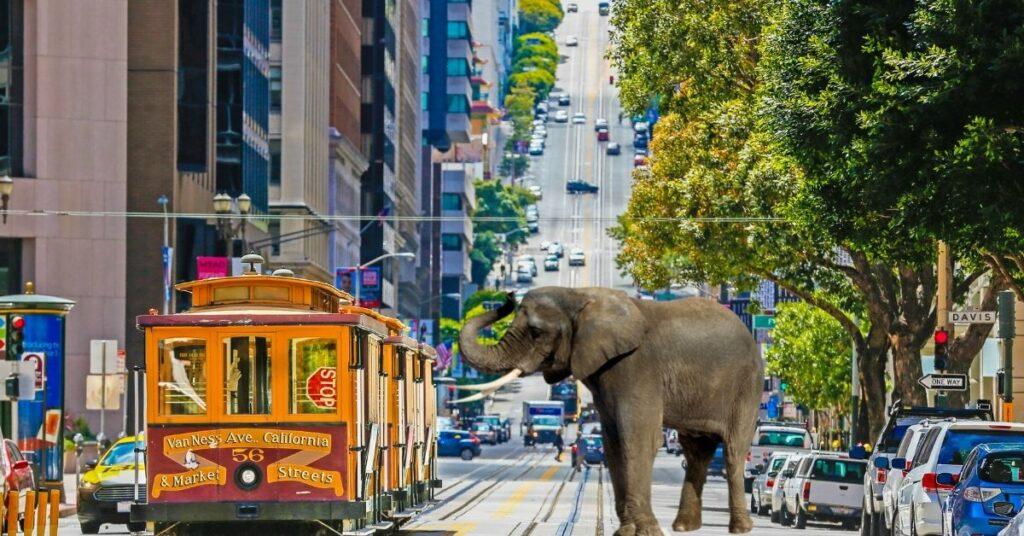 Elephants must be on a leash in San Francisco